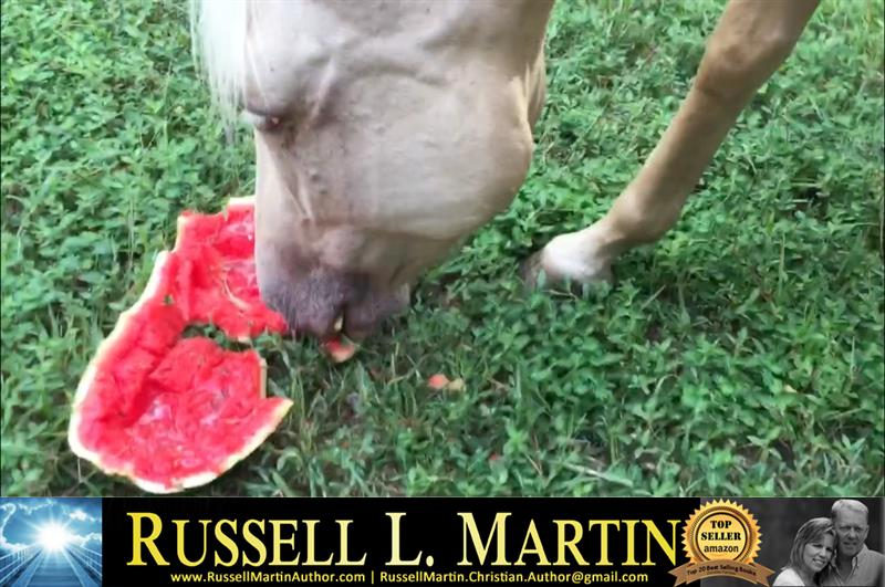 Review image from Horsey Watermellon Treat!